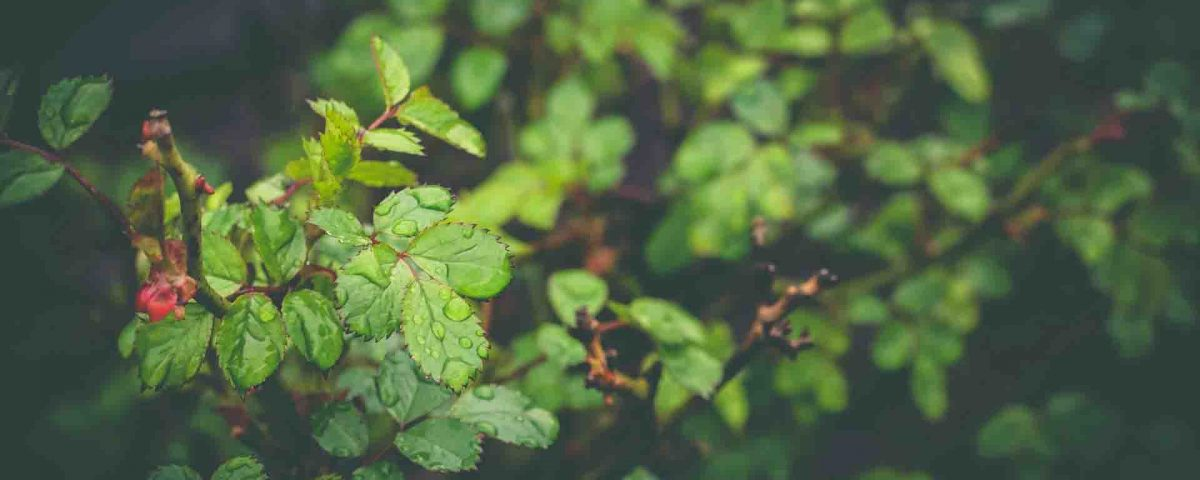 Green Leaves Background Wallpaper Hd Wallpapers Stores