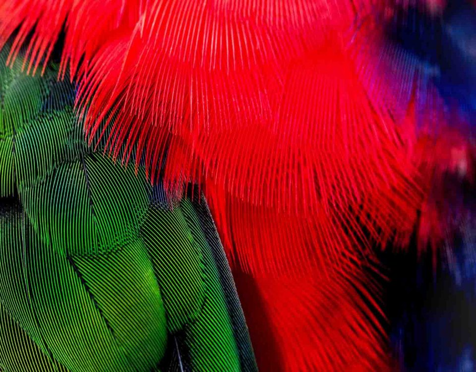 Multicolor Feather Artistic Cut