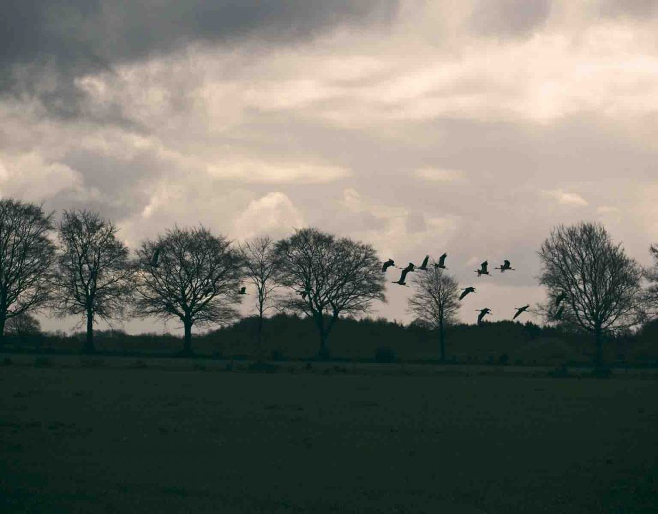 Beautiful Scenery Of Birds Flying From Trees In Clouds