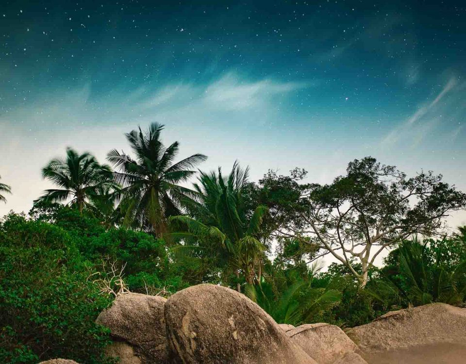 Trees, Grass, Mountains And Stones Beneath Starry Sky