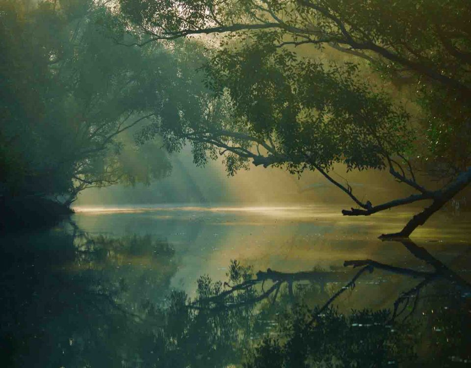 Trees Reflection In Water Sundarbans Bangladesh