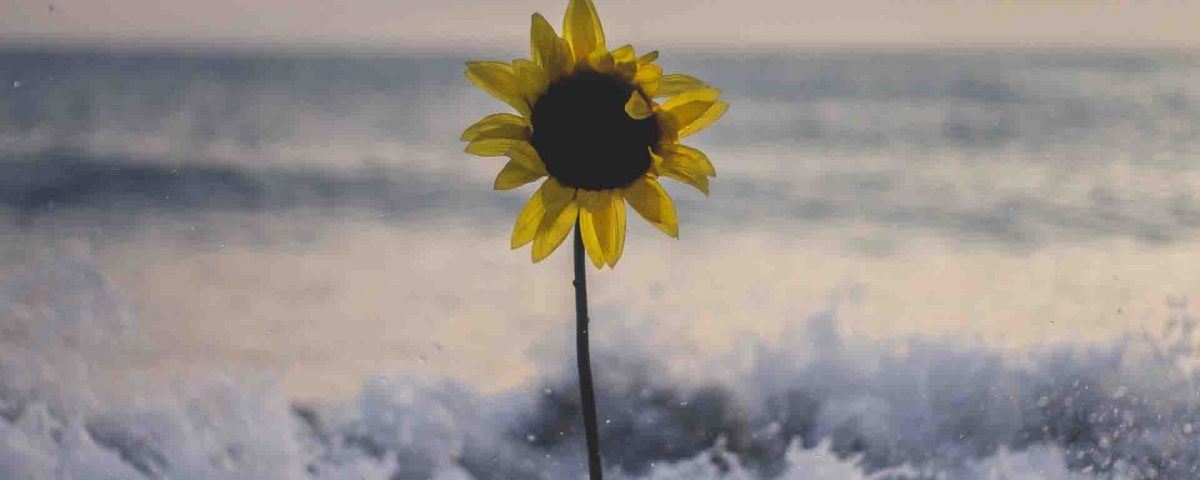 A Sunflower Flower InThe Snow And Water Waves