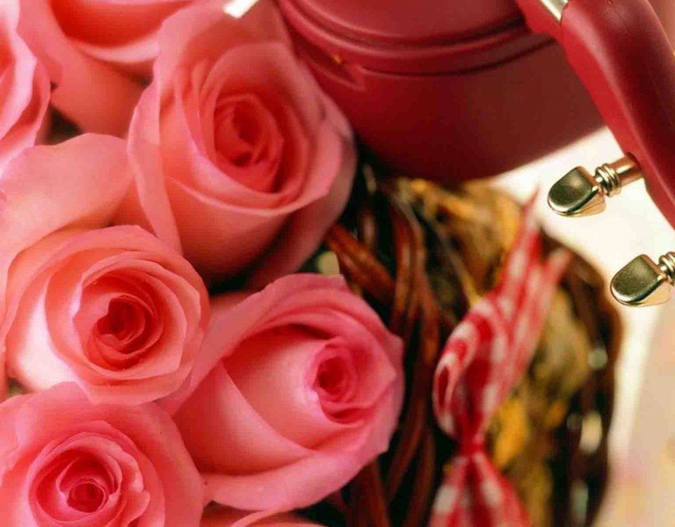 Small Pink Rose Flowers With A Violin