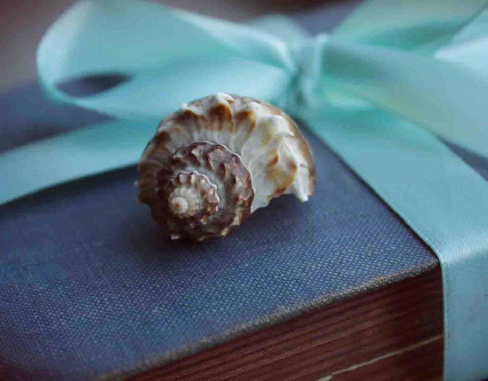 Gift of the Book With Seashell